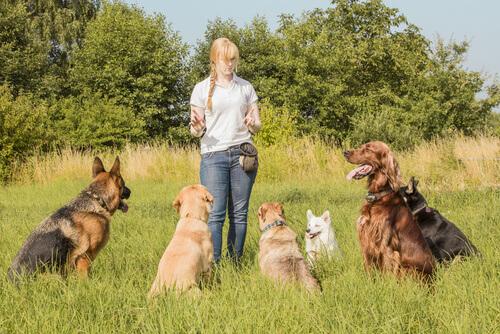 corso-addestratore-animali