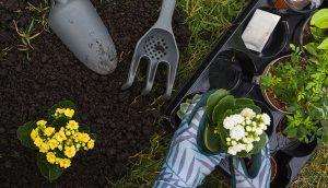 mantenere-giardino-verde